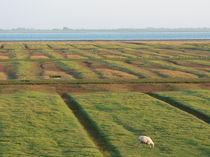 grasendes Schaf von mitlichtmalen