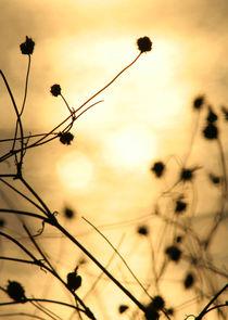 Der Sonne entgegen by teresart by Teresa Annelie
