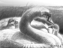 Tenderness von richard turgeon