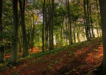 Autumnal tranquility von royspics