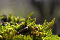 Moos - Moss by ropo13
