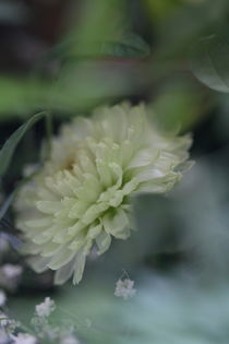 Blumennebel by teresart by Teresa Annelie