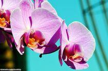 Orchideae4 von Ridzard  König