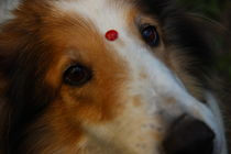 Love in the Eyes by Felipe Monclaro Puppi