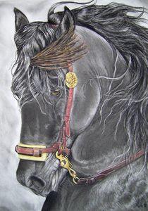 Schwarzer Andalusier von lona-azur