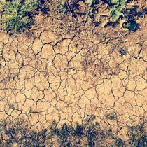 Dry Weather. by Benjamin Castle