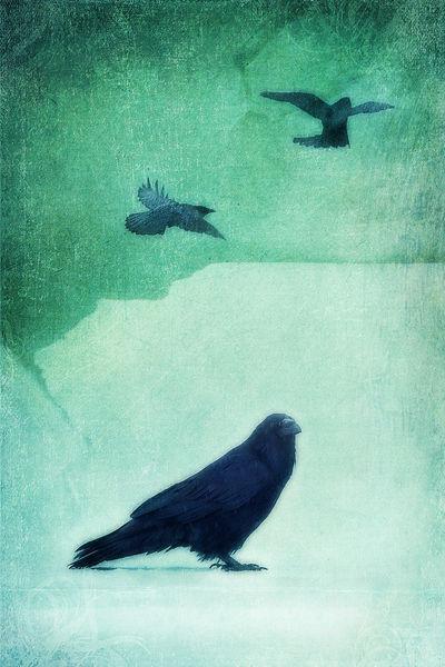 Ravenblue