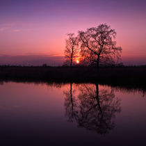 Tree Sunset von Stephen Mole