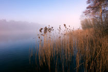 Reeds at Ormesby Little Broad by Stephen Mole