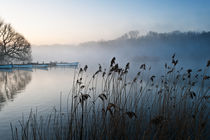 Reeds and boats at The Eels Foot by Stephen Mole