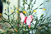 butterfly in a flower by yulia-dubovikova