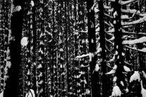 mysterious wood von yulia-dubovikova