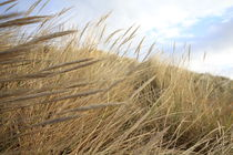 Grassy Dunes von James Biggadike