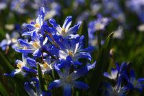 Frühlingsblumen von Wolfgang Dufner