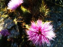 wild flowers von Nadia Kouloura