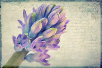 Im Frühling by AD DESIGN Photo + PhotoArt