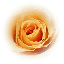 Peachy von sharon lisa clarke