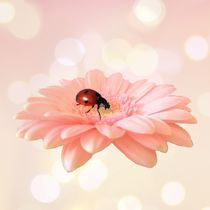 Lady on Pink by sharon lisa clarke
