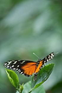 Schmetterling - bereit zum Abflug by Katharina Weigl