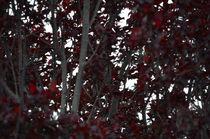 Bisous de rouge... by Jakob Astor