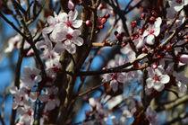 Blooms... von Jakob Astor
