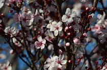 Bloom... von Jakob Astor