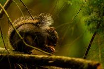 Squirrel by Juan C. García