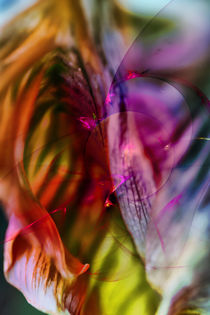 Tulip Design von Markus Wegner