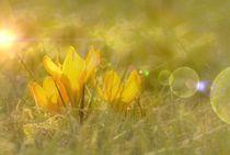 willkommen Frühling von tinadefortunata