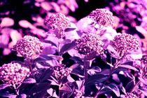 violett von tinadefortunata