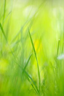 Grünes Gras im Frühling von Matthias Hauser