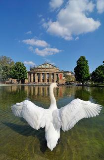 Schwan breitet seine Flügel in Stuttgart aus von Matthias Hauser