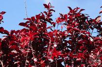 Bisous de rouge deux...  by Jakob Astor