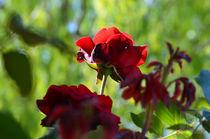 Blooms.... von Jakob Astor