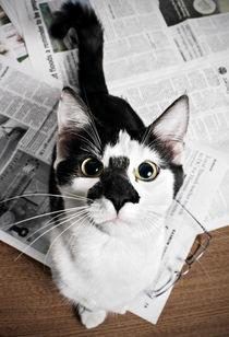 The Feline Times von William Twitty