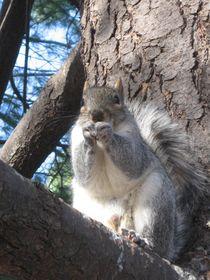 Squirrel  von Azzurra Di Pietro