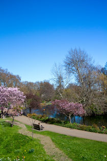St James Park London by David J French