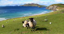View of the Blasket Islands by Barbara Walsh