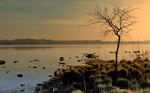 Morning at the Lake von Barbara Walsh