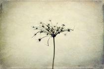 Schattenblume II von Mary-Ann Weber