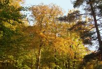 Autumn Trees  by Sarah Osterman