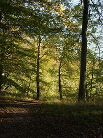 Beech Forest 2  von Sarah Osterman
