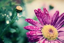 easter rain by Eva Stadler