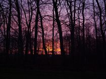 Sunrise Through the Trees  by Sarah Osterman