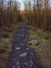 Path through the forest  von Sarah Osterman