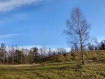 Birch on a hill  von Sarah Osterman