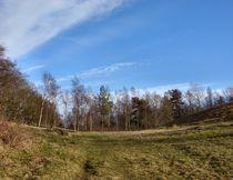 View up the hill  von Sarah Osterman