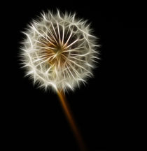 Dandelion von Sam Smith