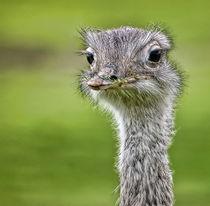 Ostrich von Sam Smith