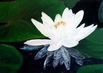 Nymphaea alba by Andrea Meyer